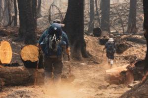 климат, лесные пожары