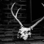К чему снится смерть и еще 9 ночных кошмаров