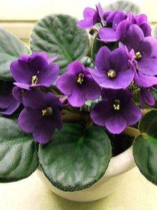 растения любви, цветы любви