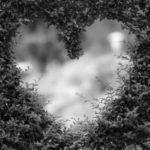 Язык цветов. 9 растений, приносящих любовь в дом