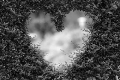растения любви