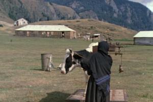 Кадр из фильма Георгия Данелии «Мимино»