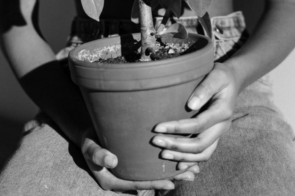 Чем подкормить цветы. Топ 8 народных средств