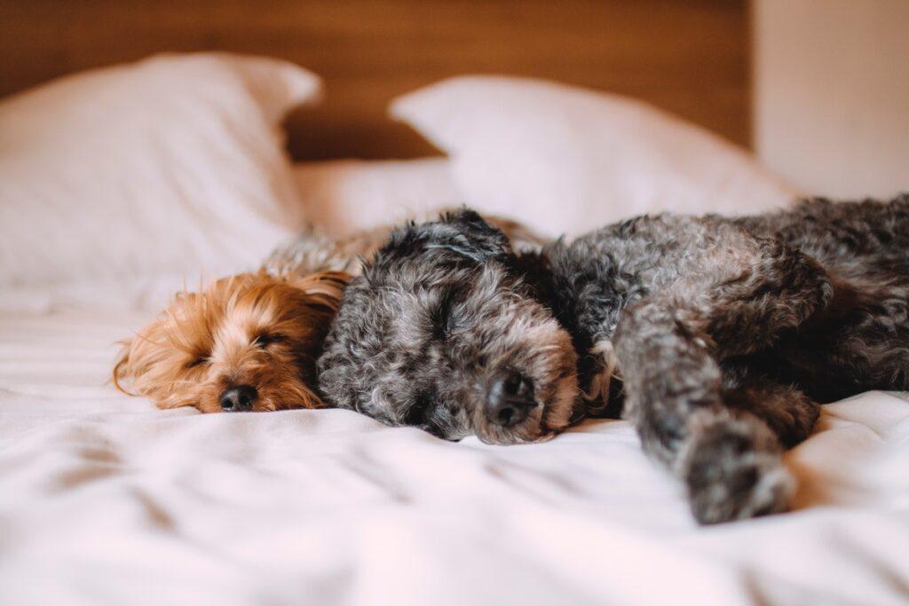 Советы сомнологов, как улучшить сон и избавиться от бессонницы.